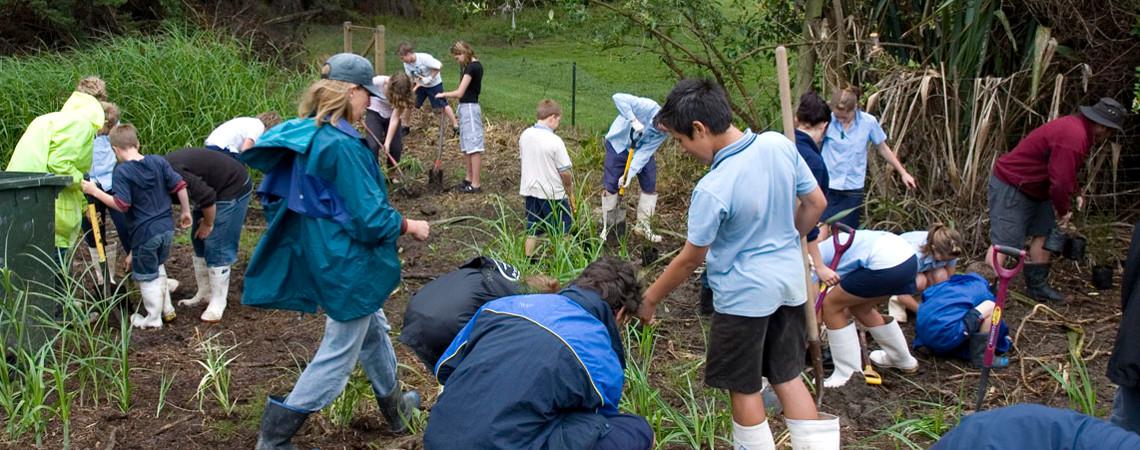 Waiheke Schools Wetland Restoration